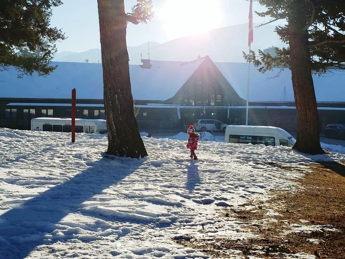 Snow In jasper Canada🇨🇦 Tree Full Length Snow Childhood Child Winter Cold Temperature Standing Sunlight Warm Clothing Pinaceae Pine Tree Silhouette Streaming Spruce Tree Pine Woodland Sunbeam Coniferous Tree Banff National Park  Outline Fir Tree Evergreen Tree Pine Cone Shore Needle - Plant Part Ski Jacket Eastern Europe Forest Fire WoodLand Deep Snow