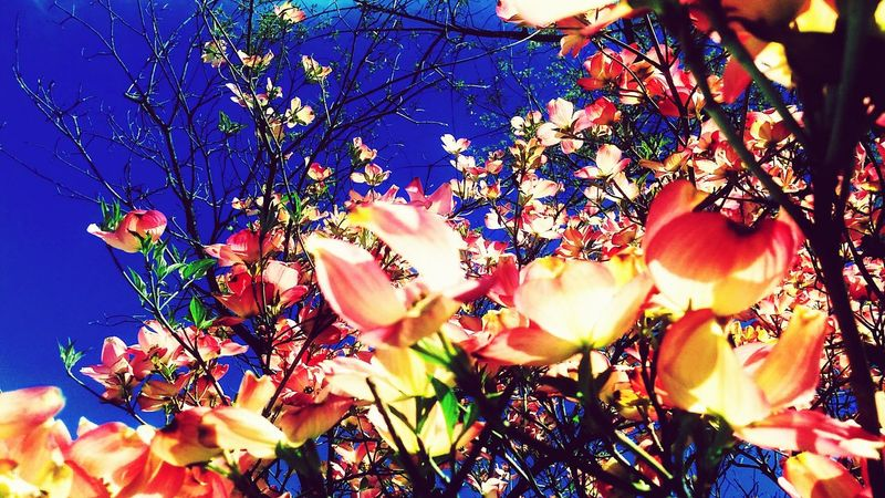 Outdoors Freshness Beauty In Nature Flower Under Blue Skies Lost In Nature
