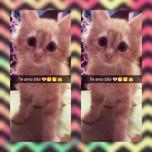 Cat♡ Love Bibi ♥ Me N Bibi Followback Chevrons Neon Color