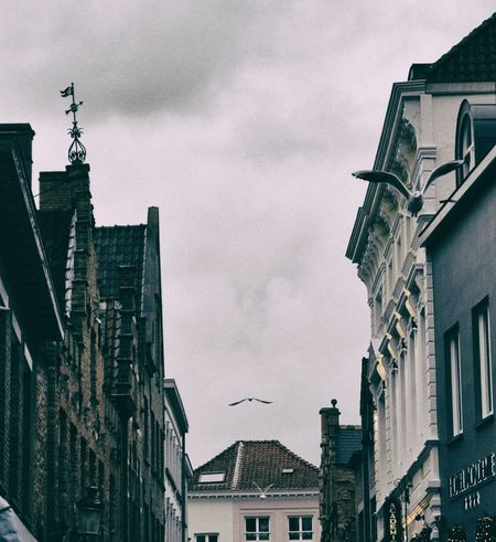Brugge, Belgium From My Point Of View Birds Birds_collection Charming Place City Low Angle View Sky Streetphotography