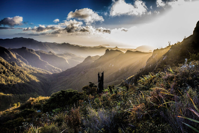 Sunrise after a steep climb to the Pinnacles Pinnacles Beauty In Nature Coromandel Coromandel Peninsula Day Landscape Mountain Mountain Range Nature New Zealand No People Outdoors Range Scenics Sky Tranquil Scene Tranquility Tree