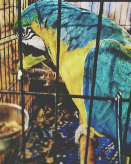 Animal Photography Eating Birds_collection Bird Cage Pictureoftheday Eyem Best Shots Beutiful  Colors Check This Out