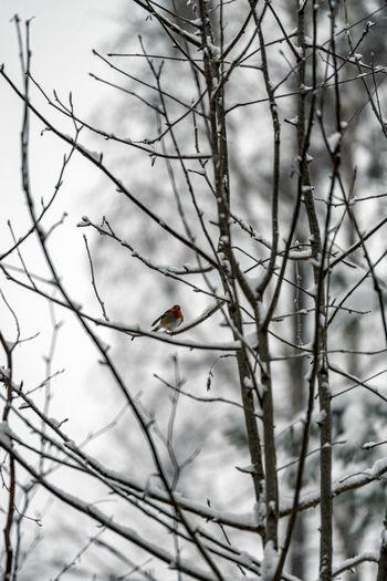 Close-up of bird perching on bare tree
