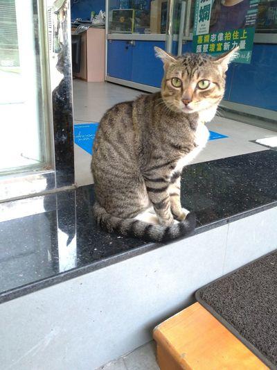 Cat boss Door