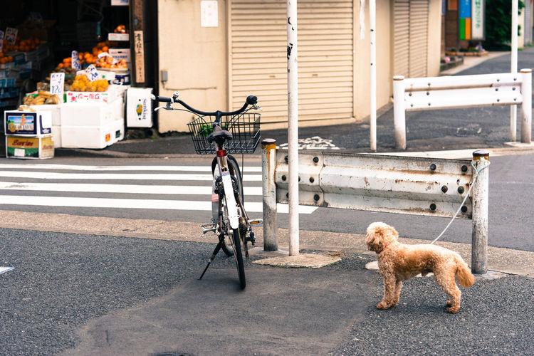 Alone In The City  City Life Dog Rx100 Shitamachi Sidewalk Sony Sony Rx100 Tokyo Tokyo,Japan