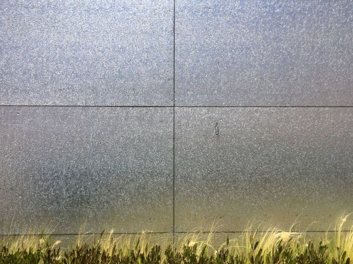 No People Plant Day Grass Field Built Structure Land Pattern Architecture Textured  Wall - Building Feature Backgrounds Outdoors Growth Flooring Close-up Full Frame The Minimalist - 2019 EyeEm Awards