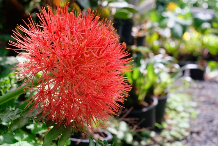 Flower Head Flower Red Springtime Uncultivated Close-up Plant