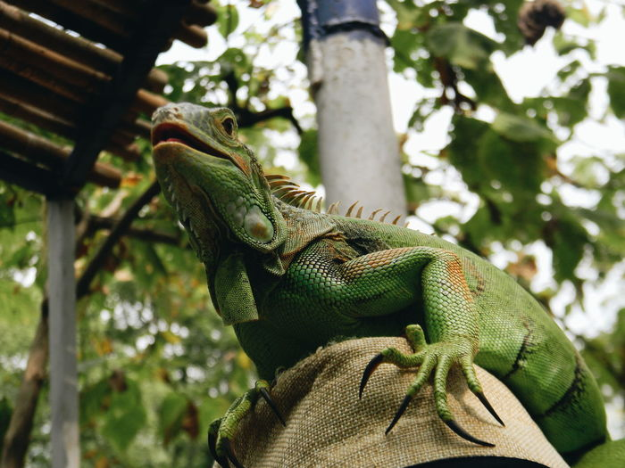 Low angle view of lizard on tree