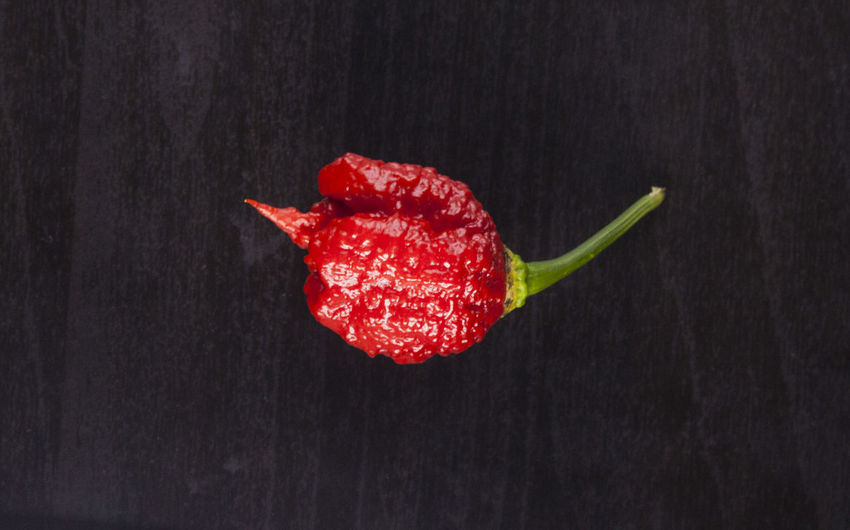Black Background Carolina Reaper Chili Pepper Close-up Day Food Food And Drink Freshness Healthy Eating Hot Pepper Hot Pepper Sauce Indoors  No People Ready-to-eat Red Spice