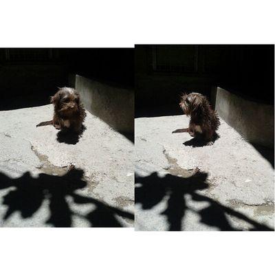 Chocolatttttteee~ ♥♥♥ Dogs Pet VSCO Vscocam vscogrid