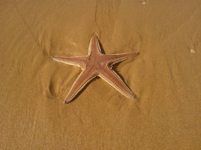 Seastar Sand Beach Estreladomar Praia Areia Nature Nature_collection Nature Photography
