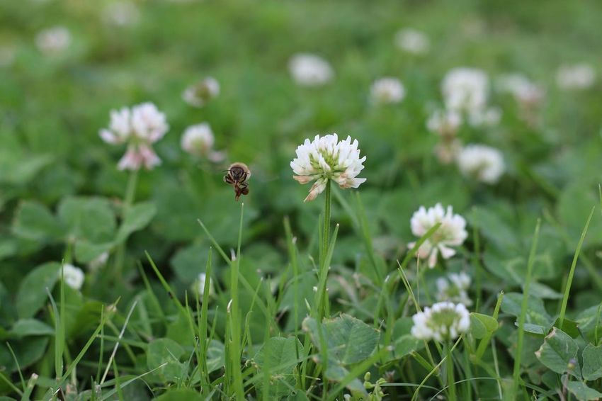 Animal Themes Animal Wildlife Animals In The Wild Beauty In Nature Bee Blooming Close-up Day Field Flower Flower Head Fragility Freshness Grass Green Color Growth Insect Nature No People One Animal Outdoors Petal Plant Pollination Tiny