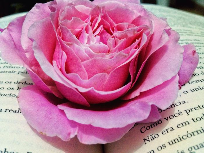 Love_Books❤️ EyeEm Gallery First Eyeem Photo Taking Photos Photography Books EyeEm Nature Lover Rosas🌹 Artistic Flowers Nature My Favorite Photo My Best Photo 2015 Vida