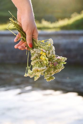 Close-up of flower holding the sea