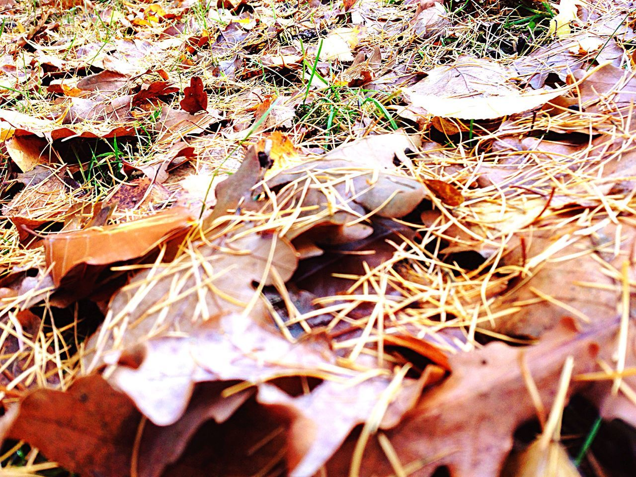 dry, nature, leaf, autumn, change, outdoors, no people, day, close-up