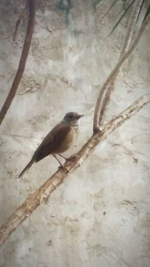 A special guest this morning... Bird Single Urban Nature Garden Simplicity Tenderness