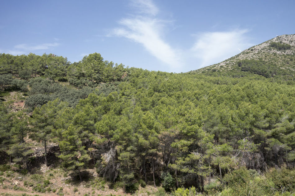 Barracas Beauty In Nature Castellón Cloud - Sky Day Forest Green Color Growth Landscape Mountain Nature No People Outdoors Plant Scenics Sky Tranquil Scene Tree