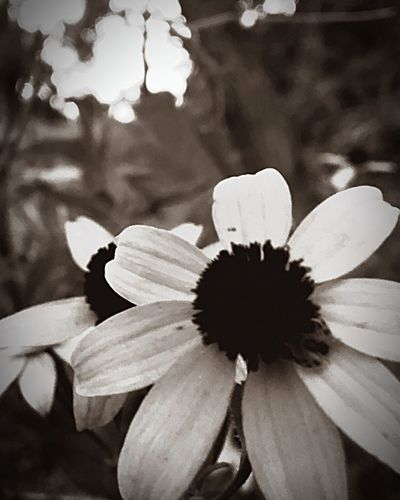 Close-up Flowers Shot By IPhone Shades Of Grey Shadows & Lights Perspective Leaves The Great Outdoors With Adobe