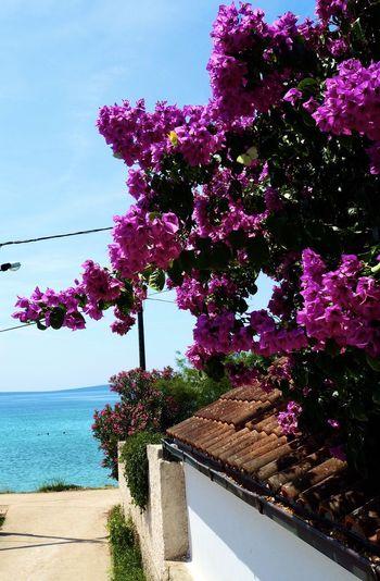 Pink flowering plants by sea against sky