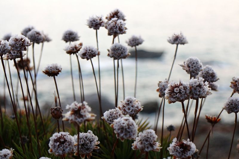 FACING THE SEA... Italia Italy Horizon Growing Lookingup White Color Plant Stem Wildlife Close-up Sea And Sky Seaside Grass Outdoors Taking Photos Focus Sea Detail Landscape Nature_collection Nature Flowers Flower Head Flower Plant Flowering Plant Beauty In Nature Growth Sky Focus On Foreground Freshness