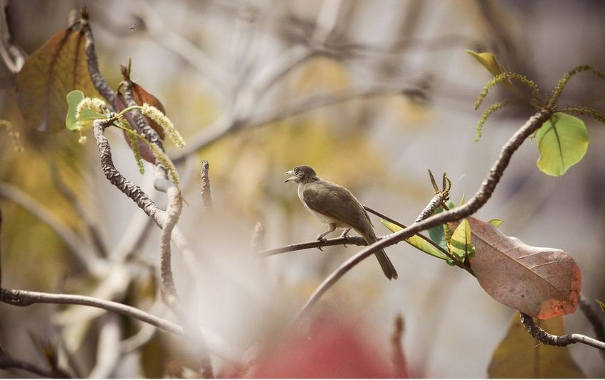 Animal Themes Animals In The Wild Avian Beauty In Nature Bird Branch Close-up Day Focus On Foreground Nature One Animal Perching Plant Selective Focus Wildlife Zoology นกไท