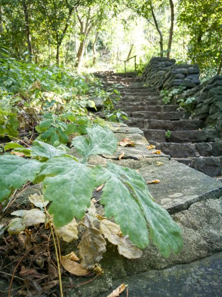 Basalt Forest Beauty In Nature Steps Stairs Badacsony