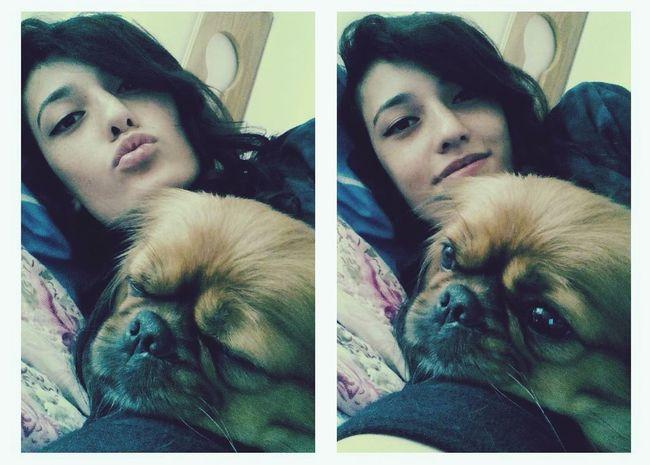 Benim minik kızımmm Doglover Pekingese Daisy ♥ Kızım