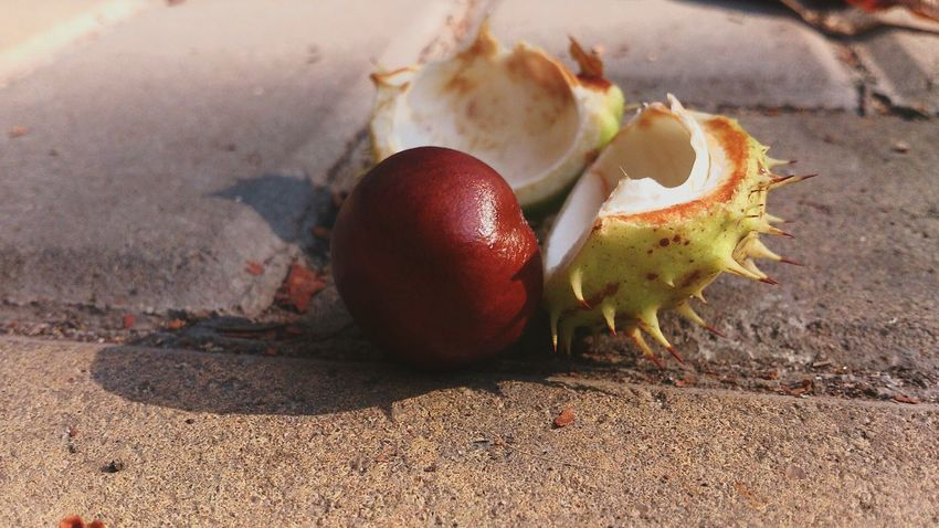 Time of Chestnuts Close-up Freshness Leaf Brown Fallen Nature No People Surface Level Autumn Plant Seeds