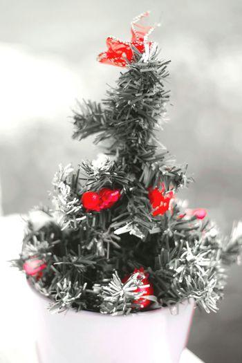 Bientôt Noël 😆 Rouge Houx Petite Fleur Apprendre La Photo Canonphotography Love Photography Passion Decembre