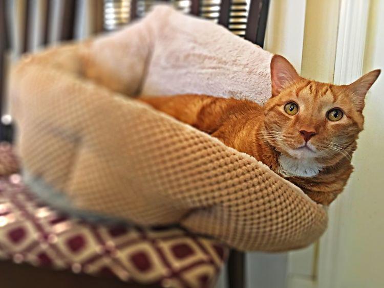 Kitty Cat Balance Precarious