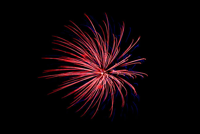 Fireworks on black night sky. Firework Display Photos. Arts Culture And Entertainment Celebration Event Exploding Firework - Man Made Object Firework Display Illuminated Long Exposure Low Angle View Motion Multi Colored Night No People Outdoors Sky