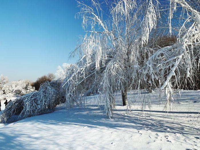 Harbin's snow