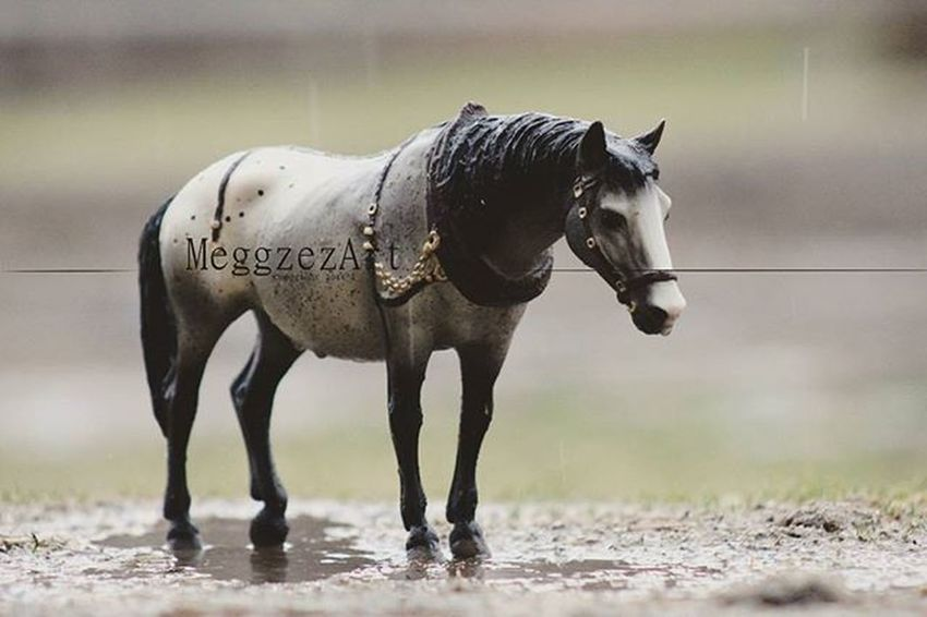 """""""Lonely is not being alone, its the feeling that no one cares."""" Breyer Breyers Breyerhorse Breyerhorses Breyerhorsephotography Modelhorsephotography Modelhorse Modelhorses Toyphotography Photography Horse Horses Custombreyer Breyercustom Breyermodel Custom Breyercollector"""
