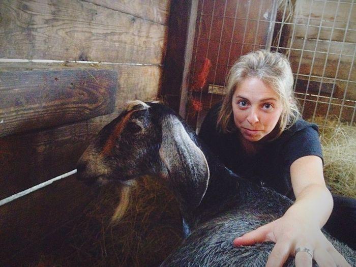 Goats Serenitygoats #Serenitygoats
