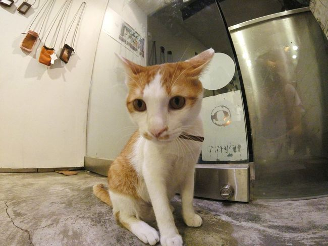 EyeEm Gallery Cat Cats Streetphotography Taking Photos Take A Walk Saturday Afternoon Gopro Enjoy The New Normal