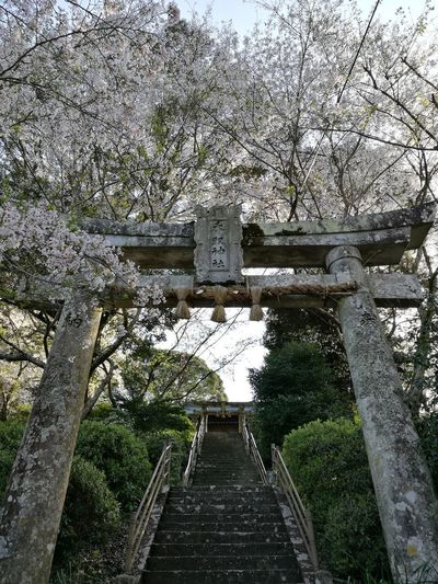 Japan 神社 Sky Growth Tree No People Outdoors Day Growth Nature Low Angle View Close-up