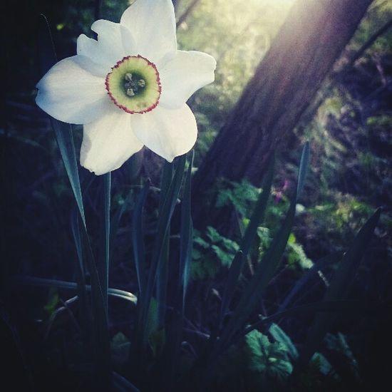 Украина♥ Закарпатье цветы🌸🌼🌻💐🌾🌿 красиво солнце Закат лес и природа Нарцисс