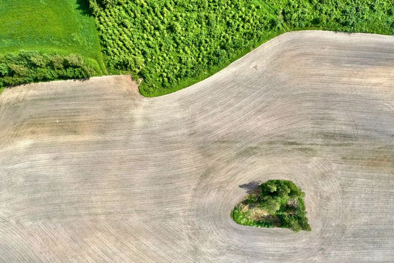 green island in a recently plowed field Drone  Mavic2pro Island Green Color Plowed Field Agriculture Contrast Looking Down Drone  Aerial Photography Landscape Plant Land Nature No People Environment Day Tree Field Outdoors Grass Growth Beauty In Nature Rural Scene Tranquility Tranquil Scene Close-up Pattern High Angle View