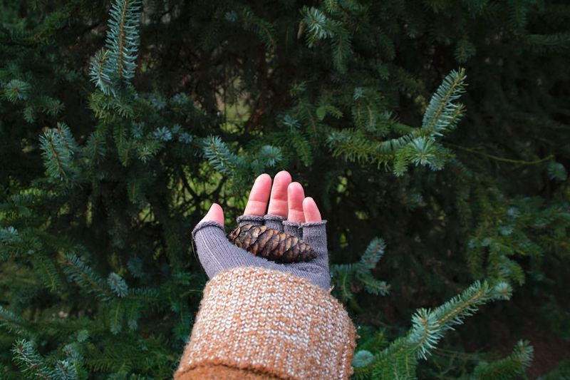 Cropped hand of woman holding pine cone against tree