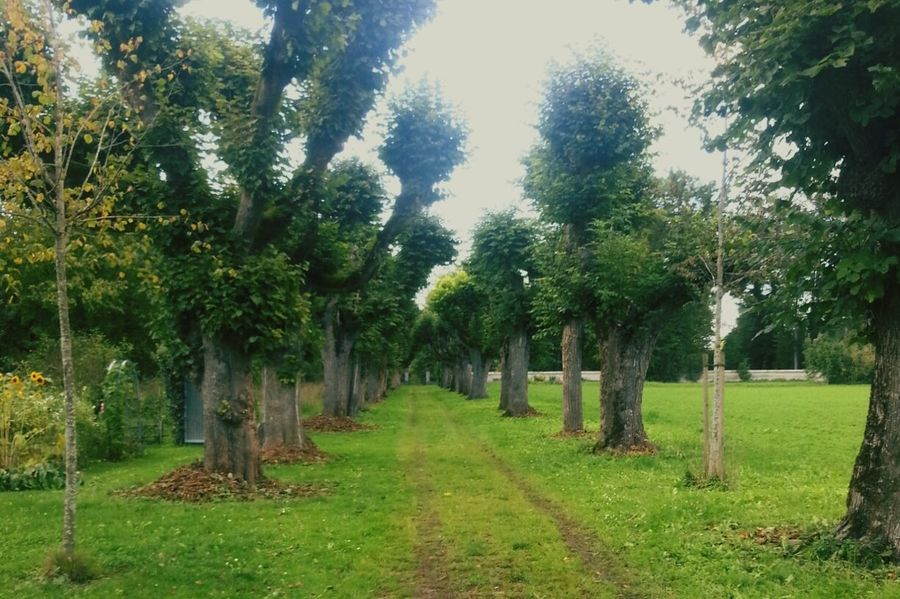 Nature Trees EyeEm Nature Lover Garden Photography Landscape Tree Endlessness Where Does It Lead? 🌴🌱🍀🍁🍂🍃🌽🌿