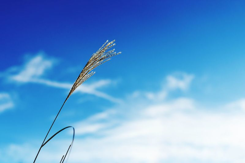 Low Angle View Of Plant Against Cloudy Blue Sky On Sunny Day