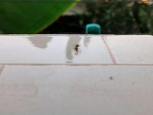 love between 2 ants <3
