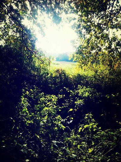 Nature Natur Sonne Grün Fotografie Pics By Mr_badabing Leafes
