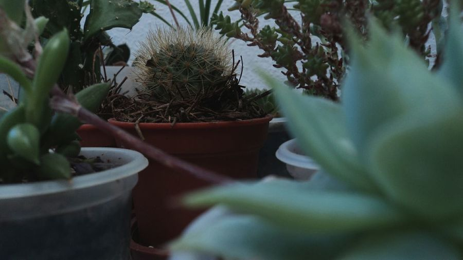 Houseplants Cactus Smolplants Plants 🌱 Plant Photography Ontheway Fine Art Photography Fine Art Home Is Where The Art Is Color Palette Colour Of Life Eyeem Photo Two Is Better Than One