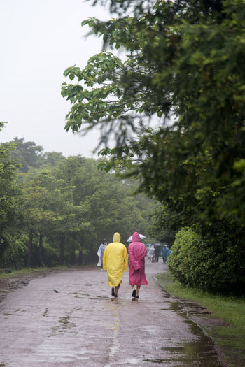 rainy day of Bijarim which is a famous forest in Jeju Island, South Korea Adult Bijarim Day Forest Full Length Growth JEJU ISLAND  Leisure Activity Men Nature Outdoors Pathway People Rain Rain Coat Rain Coats Rainy Real People Rear View Sky Togetherness Tree Two People Walking Women