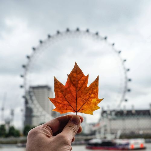 Close-up of hand holding maple leaf against ferris wheel