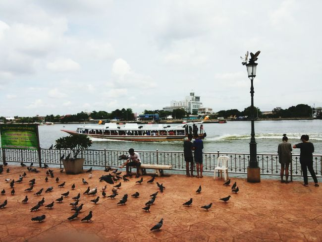 Time never stop. Pier Birds Lifestyles Picofday Warmlight Water Jawphaya Thailand River View