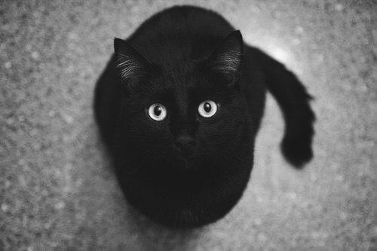 Creaciones maravillosas ❤️❤️❤️❤️ Cat Beauty Perfect Follow4follow