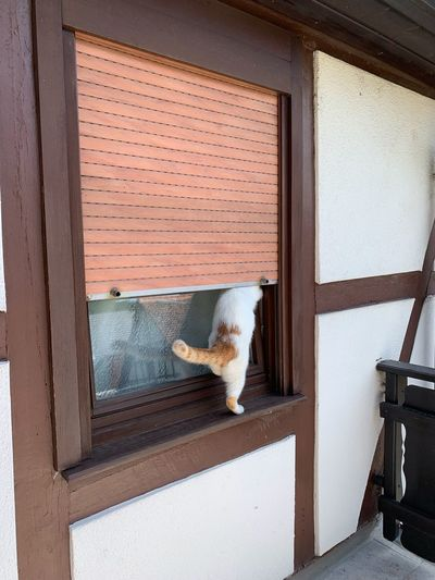 Cat looking through window of a house