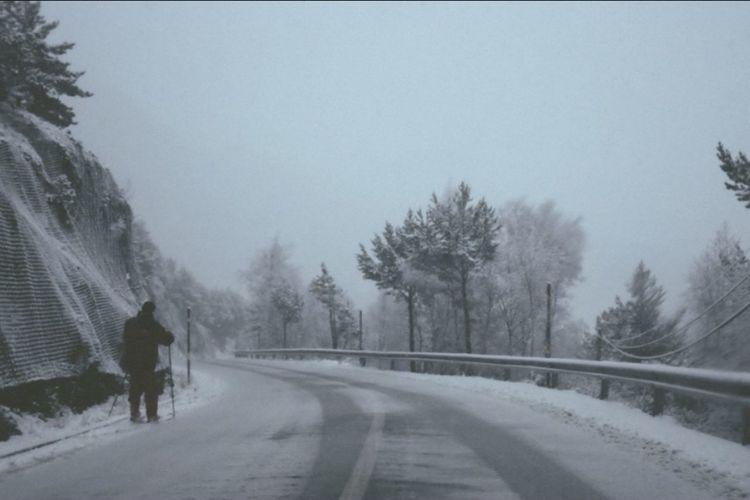 Road along trees